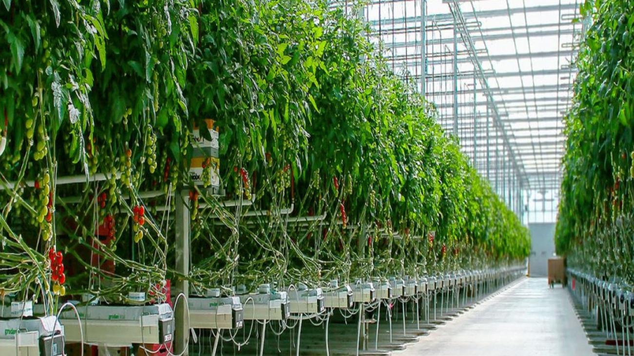 عملکرد-و-نکاتی-درباره-سیستمهای-گرمایشی-در-گلخانه